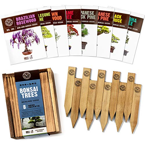 Bonsai Tree Seeds Kit - 8 Popular Varieties of Non GMO Mini Bonsai Trees, Bamboo Plant Markers, Wood Gift Box - Bonzie Tree Seed Starter Kits, Grow Bonzai Indoor Garden, Gardening Gifts Idea