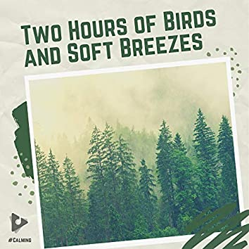 Two Hours of Birds and Soft Breezes
