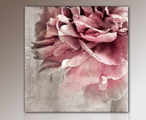 Paul Sinus Art TOP Leinwandbild Blume BLÜTE (flower-50x50cm) Bilder fertig gerahmt mit Keilrahmen riesig. Ausführung Kunstdruck auf Leinwand. Günstig inkl Rahmen