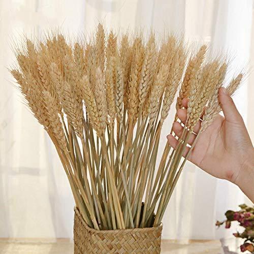50 Piezas de Flores secas Decoración Bundle seco Trigo Secado Flores Big Pack Flores for Bodas Natural Home Decoración Artificial de Trigo Flores Artificiales