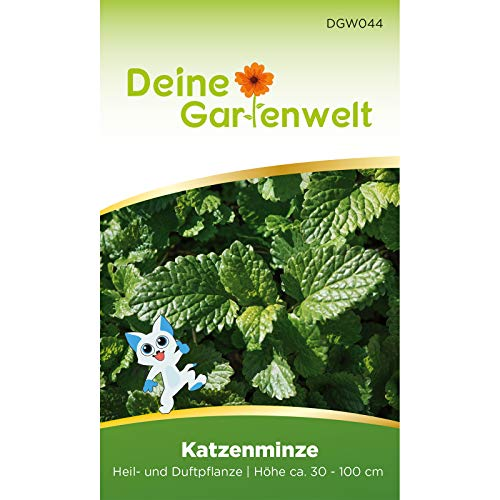 Katzenminze Samen - Nepeta cataria - Katzenminzesamen - Kräutersamen - Saatgut für 500 Pflanzen
