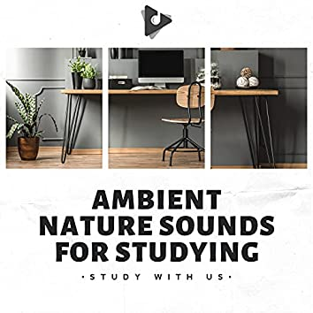 Ambient Nature Sounds for Studying