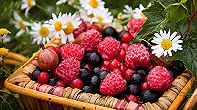 HGYTR Basket Of Berries Raspberry Currant Black Currant Chamomile Diy Digital Oil Paintings Painting Acrylic Paint Kit Home Decoration
