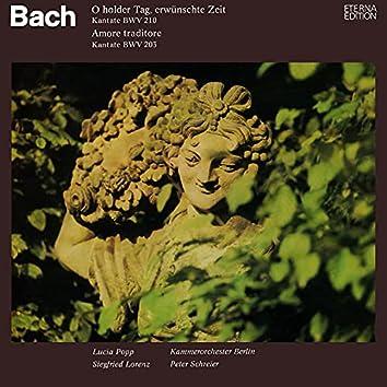 Bach: O holder Tag, erwünschte Zeit, BWV 210 / Amore traditore, BWV 203