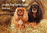 Whole-colour Cavalier King Charles Spaniel (Wandkalender 2021 DIN A4 quer)