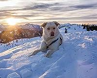 絵画キャンバスアクリル絵の具色原稿犬の山雪空ライフガードDiyデジタル絵画数字による現代美術クリスマスホリデーギフト家の装飾 カスタマイズ可能 40x50cm DIYフレーム