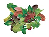 Burpee Salad Mix Mesclun Seeds 1800 seeds