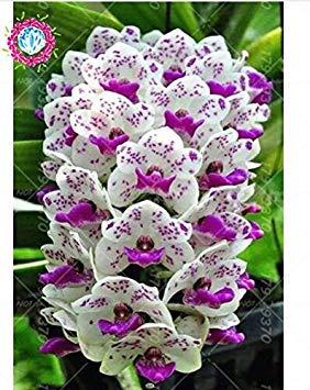 VISTARIC 14: Seltene Bonsai Kürbiskerne Cucurbita Golddraht Kürbis Garten Gewächshaus Bio-Gemüsesamen Geeignet für Kochen 20 PC/Beutel 14
