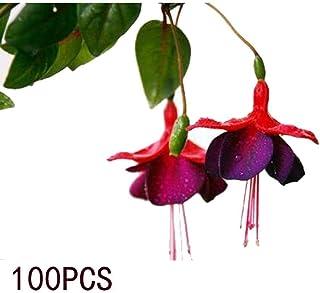 Oliote 100Pcs Begonia Flower Seeds Bonsai Plant DIY Garden Flowers