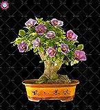 Shopvise 50Pcs / Sac Graines Hibiscus Fleur Rose vivaces intérieur Graines Floraison DIY Jardin Semences Ing: 3