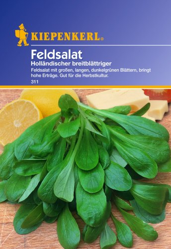 Kiepenkerl Feldsalat Holländischer breitblättriger
