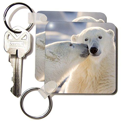 3dRose 8 x 8 x 0.25 Canada, Manitoba, Hudson Bay, Churchill, Polar bear, Janyes Gallery - Key Chains, set of 6 (kc_70261_3)