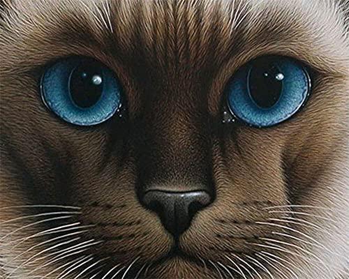 Heyao DIY Pintura al óleo de por Números Kit Gato Animal para Adultos Niños Pintura al Óleo De Lona Preimpresos para la Decoración De La Casa Oficina Framed_60x75cm(24x30inch)