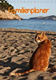 Familienplaner Katzen (Tischkalender 2021 DIN A5 hoch): Stubentiger und Streuner (Familienplaner, 14 Seiten ) (CALVENDO Tiere)