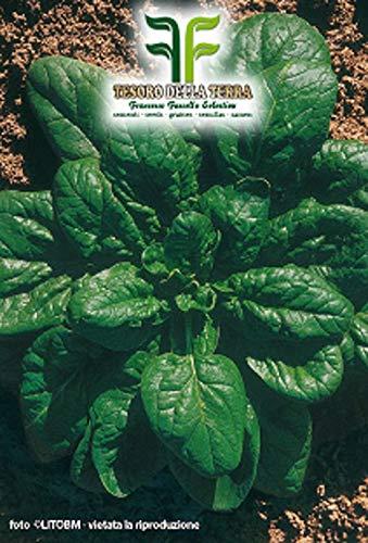 640 c.ca spinazie matador zaden - spinacea oleracea in originele verpakking gemaakt in italië - spinazie