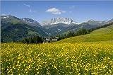 Poster 100 x 70 cm: Alpenwiese in der Schweiz von Juerg