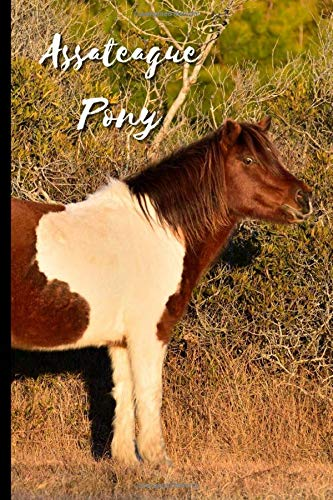 Assateague Pony: Journal and Notebook - Composition Size (6'x9') With 120 Lined Pages, Perfect for Journal, Doodling, Sketching and Notes