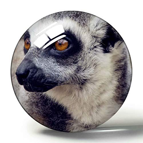 Regno Unito Inghilterra Zoo di Londra 3D Magnete da Frigorifero Collezione di Souvenir Regalo da Viaggio Cerchio Magneti da Frigorifero in Cristallo