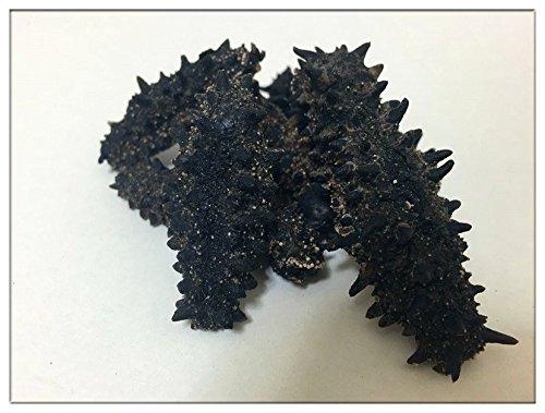 【北海道産】B級品乾燥なまこ 250g入 天然ナマコ (ML(8g以上))