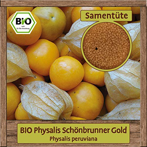 BIO Physalis Samen Sorte Schönbrunner Gold (Physalis peruviana) Gemüsesamen Physalis Saatgut