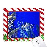 海洋深層水の青海馬水 ゴムクリスマスキャンディマウスパッド