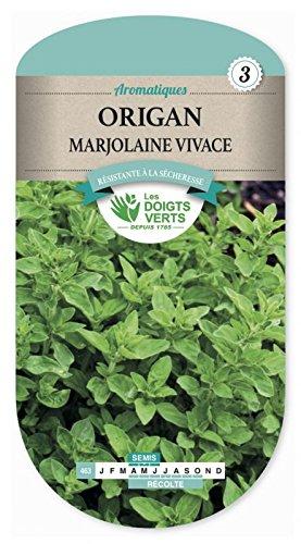 Les doigts verts Semence Origan Marjolaine Vivace