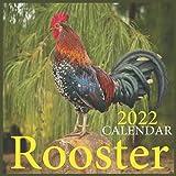 Rooster Calendar 2022: Rooster Calendar 2022 ,Chickens Calendar 2022, Farm Animals Calendar ,Square Calendar 2022