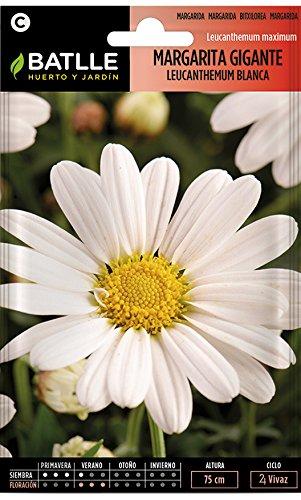 Batlle – Semi di Fiori – Margherita Gigante Leucantemum Bianca