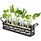 Mkono Plant Terrarium with Metal Stand, Retro Glass Planter Tabletop Flower Vase Perfect for Propagating Hydroponic Plants Flower Cutting Cute DIY Centerpiece Home Office Garden Decor, 5 Bottle