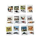 Wankd Juego de aprendizaje Montessori para niños 24 piezas, figuras animales insectos, juguete y tarjetas fotográficas, palabras fomentar la voz, granja (11 x 7 cm)