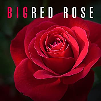 Big Red Rose - True Love, Feeling in Heart, Falling in Love, Meeting with Sweetheart, I Love You, Remember Valentine's Day, Love Actually, Real Feeling for Christmas