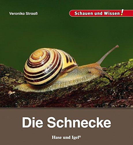 Die Schnecke: Schauen und Wissen!