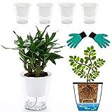 DeEFL Clear Self Watering Planters