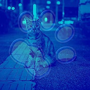 子猫(音楽)