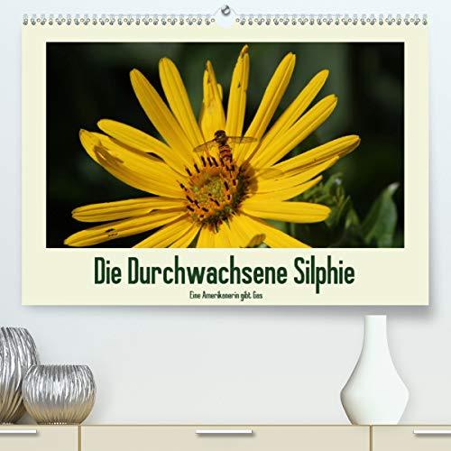 Die Durchwachsene Silphie - Eine Amerikanerin gibt Gas/CH-Version (Premium, hochwertiger DIN A2 Wandkalender 2021, Kunstdruck in Hochglanz)