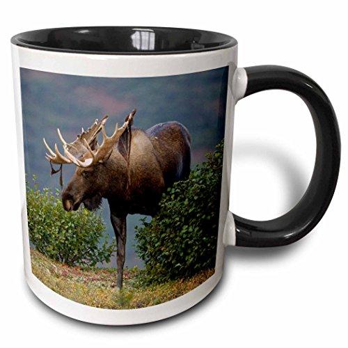 3dRose Elch Natur, Denali NP-alaska-us02jmc0001-joe and Mary Ann McDonald-Two Ton, schwarz, Becher, Keramik, Schwarz/Weiß, 10.16cm x 7,62x-Uhr