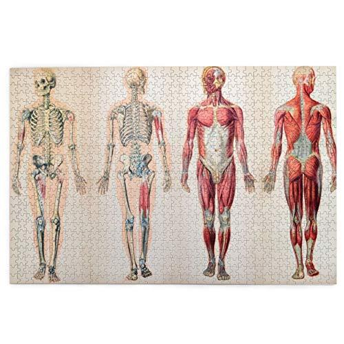 Sierra calar de 1000 Piezas,Cuerpo Humano anatomía Vintage,Juegos Rompecabezas imágenes para Adultos y niños Regalo graduación de Boda Familiar
