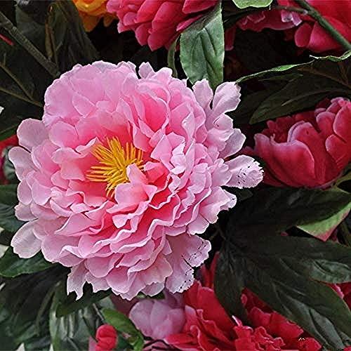 3 Stücke Pfingstrose Zwiebel Atemberaubende Mehrblättrige Pfingstrose Blühende Mehrjährige Frühlings Rhizom Kann Drinnen Und Draußen Das Ganze Jahr über Gepflanzt Werden Exquisite Blumenarrangement
