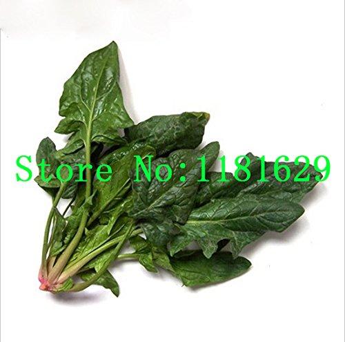(Mélanger l'ordre minimum 5 $) 1 paquet 300 + pièces originales Big graines feuilles d'épinards, semences potagères balcon bonsaï d'épinards,