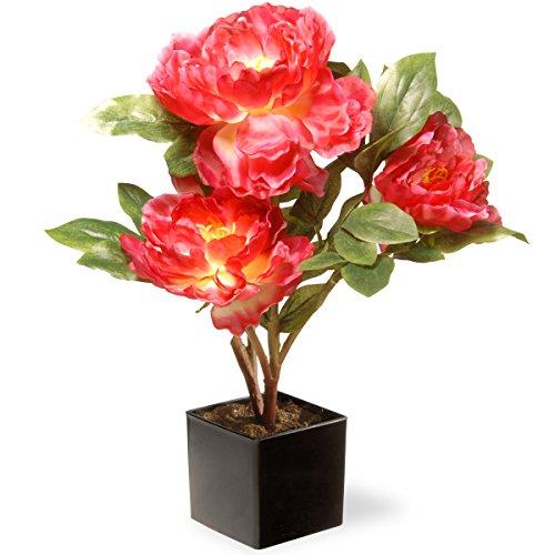 National Tree Company Artificial Flowers Includes Ceramic Pot Base | Fuchsia Peony, 15 Inch