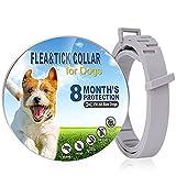 Collare Antipulci e Zecche per Cani, Collare Regolabile Impermeabile, 8 mesi Collare Per Canepossono Aiuto proteggere il cane da pulci e zecche, Soluzione Naturale Contro i parassiti per Cani