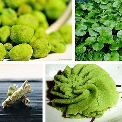 Zhouba Wasabi-Samen für Hof, Gartenpflanze, 100 Stück Wasabi-Samen, japanische Meerrettich, Gemüse, Kräuter, Gewürze