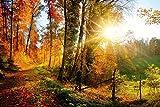 EXking Rompecabezas 1000 Piezas Hermoso Bosque Otoño Hojas de otoño Estaciones cambiantes Naturaleza Paisaje Panorama Intelectual Descompresión Divertido Juego