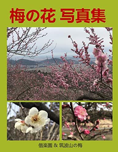 梅の花写真集