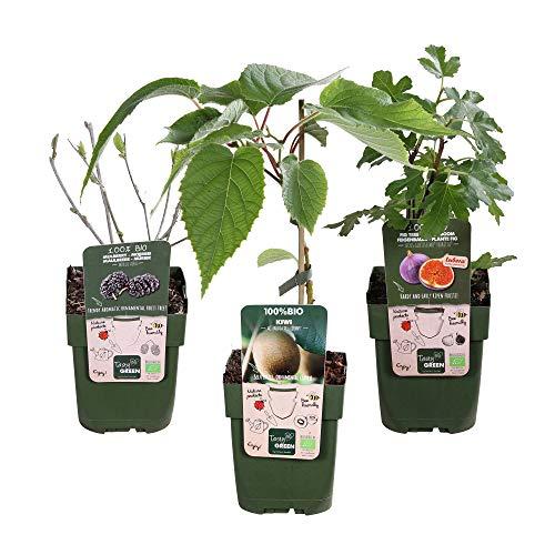 3x Obst Pflanzen