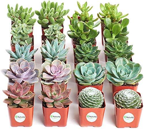 Save 30% on Shop Succulents live plants