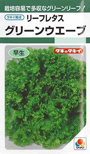 レタス タキイ グリーンウェーブ タキイのリーフレタス種です