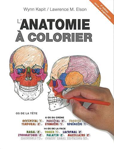 L'anatomie à colorier