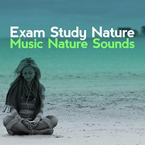 Exam Study Nature Music Nature Sounds