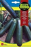 Semillas Fitó 30 - Semillas de Calabacín Belleza Negra